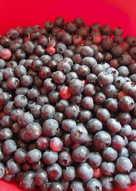 Blueberry Dumpling