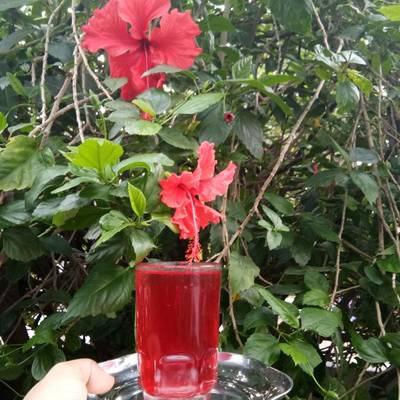 Hibiscus Juice Recipe By Rajeshwari Bhat Cookpad