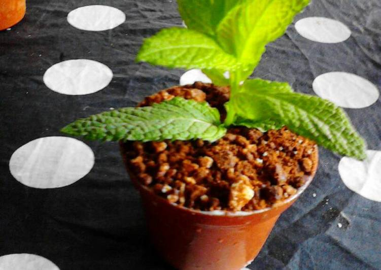 maceta con tierra de chocolate y mouse de queso receta de sara