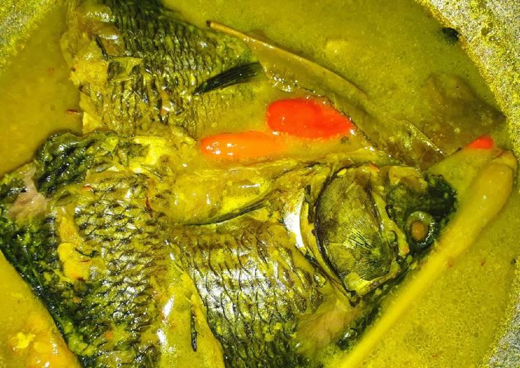 Unduh 1010 Gambar Ikan Mas Pesmol HD Terbaru