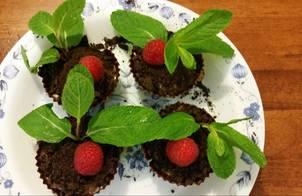 Chậu cây pudding socola (pudding plant)