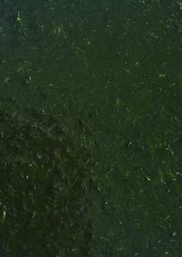 ملوخية خضراء ناعمة