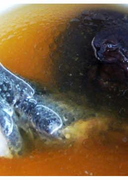 《二廚料理湯品》香菇烏骨雞湯 606.7大卡