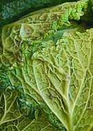 Cavolo verza insalata