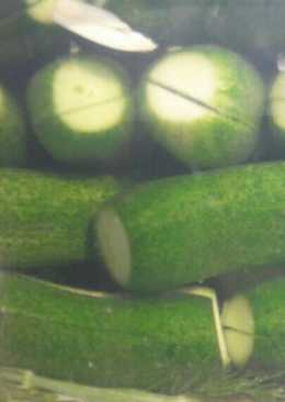 Nyári kovászos uborka