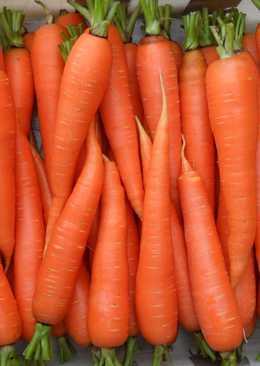 Морковные салаты на зиму