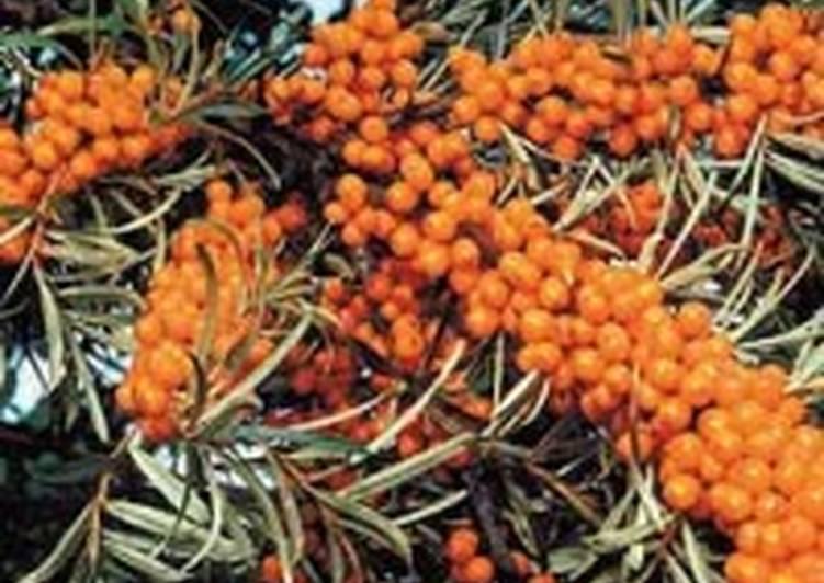 Варенье облепиховое с грецкими орехами
