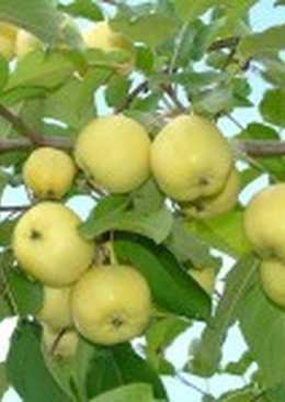 Варенье из рябины с яблоками