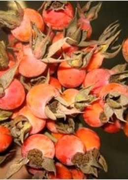 Компот из свежих плодов шиповника и яблок