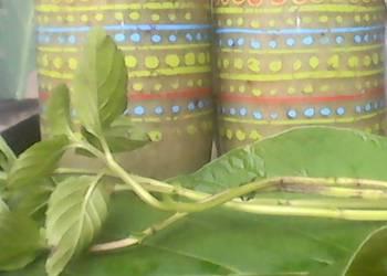 How to Cook Yummy Chayote fruit Smothie  Hoja santa  Aloe Vera