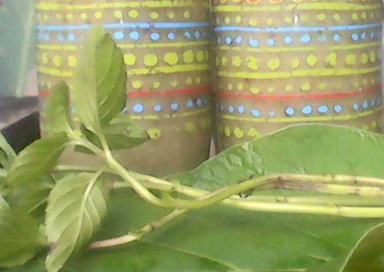 Chayote fruit Smothie & Hoja santa & Aloe Vera