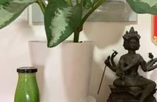 Nước ép cải kale(cải xoăn) giàu vitamin, cung cấp năng lượng cho ngày mới