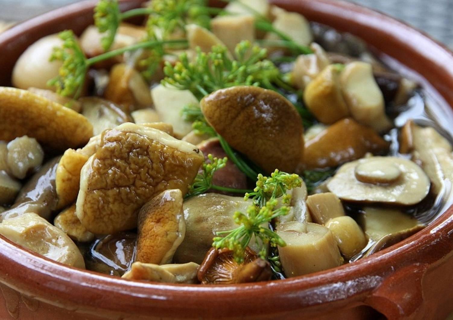 подорешник гриб приготовление рецепт засолка