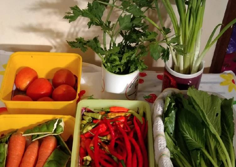 Tips Menyimpan Sayuran Agar Tetap Fresh