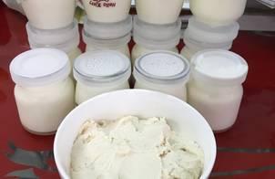 Sữa chua úp ngược và sữa chua hy lạp