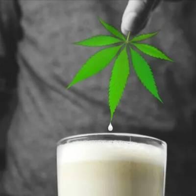Молоко приготовить конопли выращивать марихуану фильм
