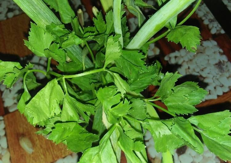 Tips Menyimpan daun sup & daun bawang