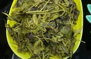 Rau sau sau chấm mẻ (món đặc sản lạng sơn-rau rừng) rất tốt cho sức khoẻ