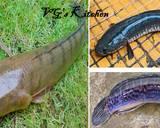 Snakehead Fish Waterspinach Salad (GABUS LALAP KANGKUNG) recipe step 6 photo