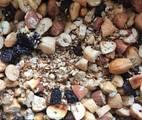 Hình ảnh bước 4 Nấu Granola Bằng Chảo